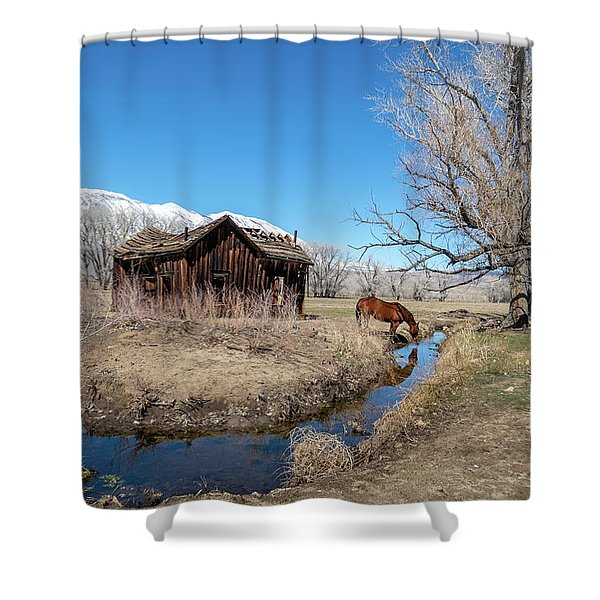 Pine Creek Horse Drinking Shower Curtain
