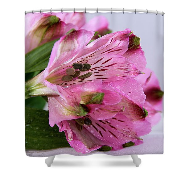 Pink Alstroemeria-4 Shower Curtain