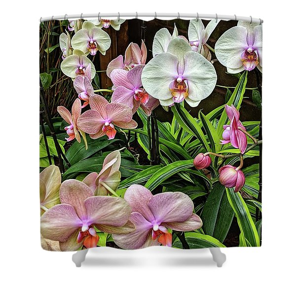 Pink And  White Orchids Shower Curtain