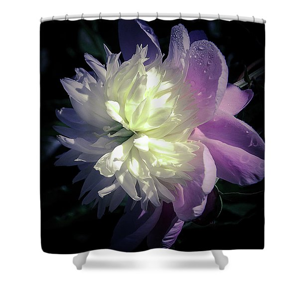 Pink And White Peony Petals And Drops  Shower Curtain