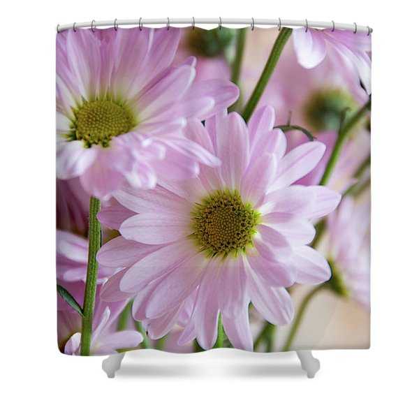 Pink Daisies-1 Shower Curtain