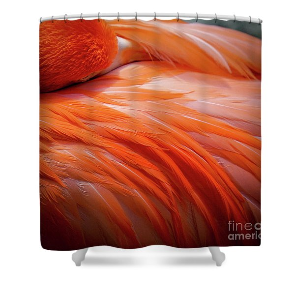 Pink Feathers Shower Curtain