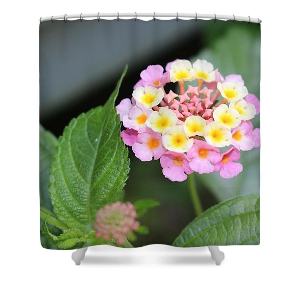 Pink Lantana Shower Curtain