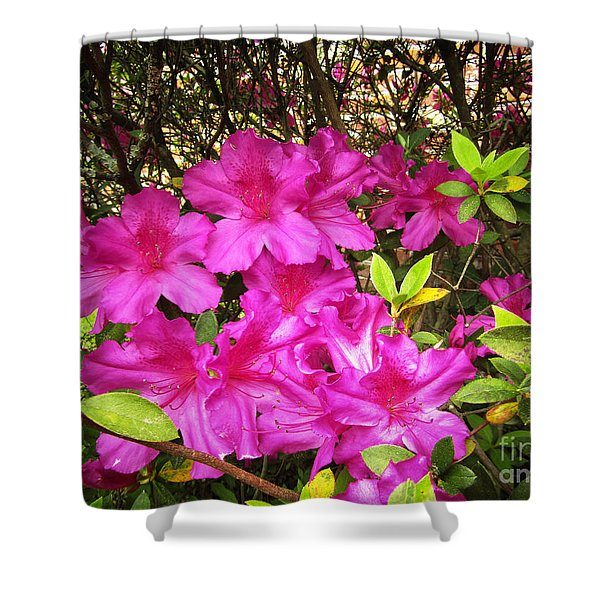 Pink Outside Shower Curtain