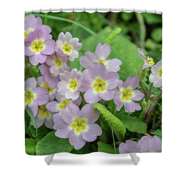 Pink Primroses In Devon Shower Curtain