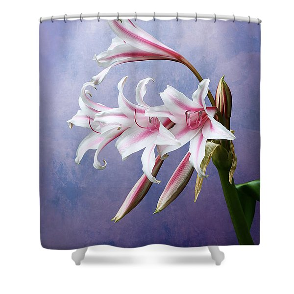Pink Striped White Lily Flowers Shower Curtain
