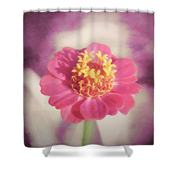Pink Zinnia Isolated Shower Curtain