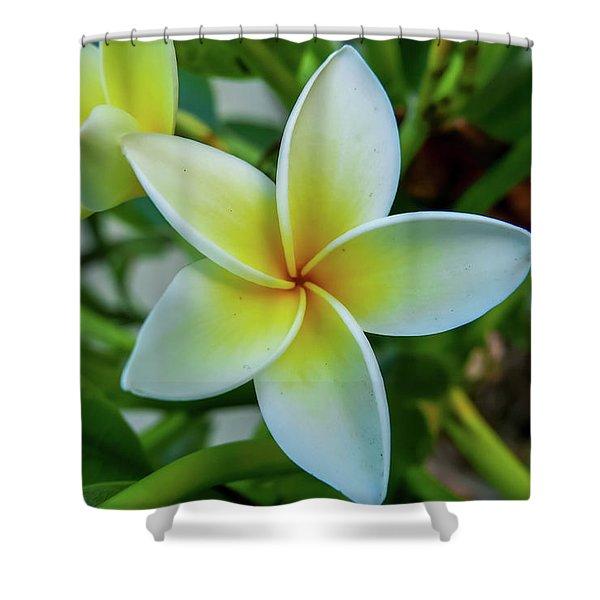 Plumeria In Bloom Shower Curtain