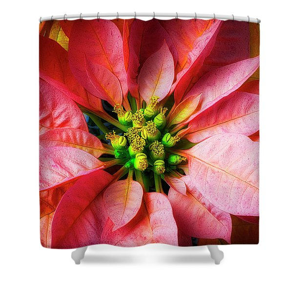 Poinsettia Close Up Shower Curtain