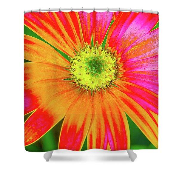 Pop Art Osteospermum 2 Shower Curtain