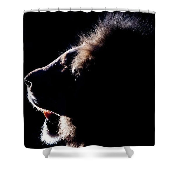 Portrait Of A Backlit Male African Lion Shower Curtain