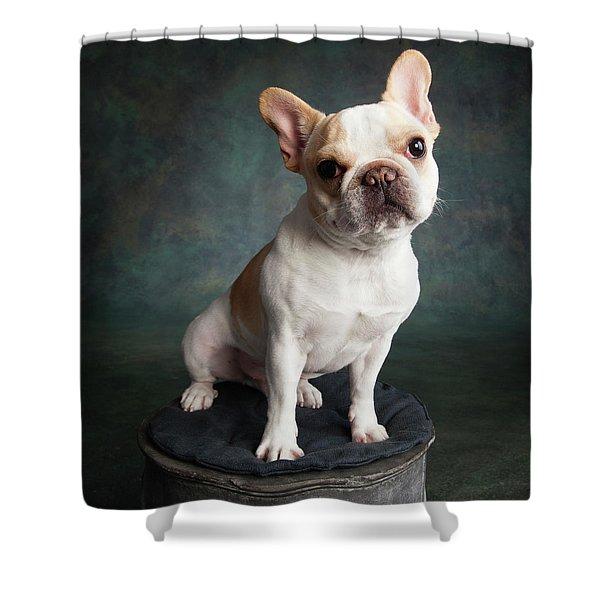 Portrait Of A French Bulldog Shower Curtain