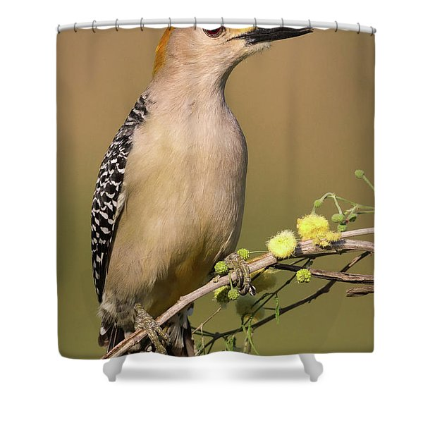 Portrait Of A Golden-fronted Woodpecker Shower Curtain
