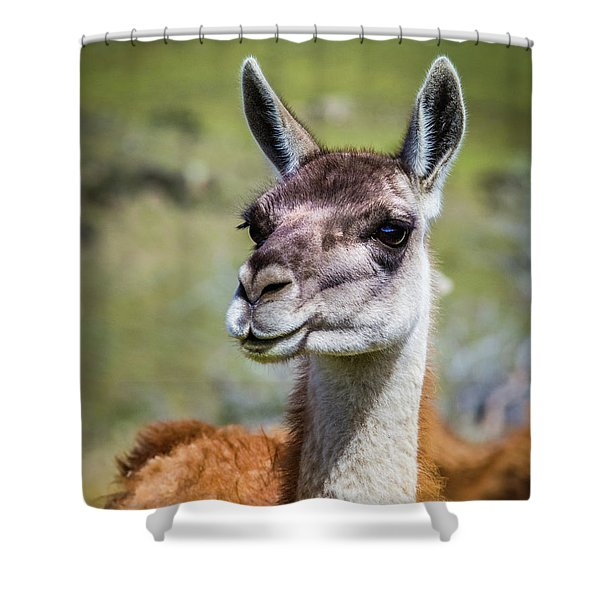 Portrait Of A Guanaco, Patagonia Shower Curtain