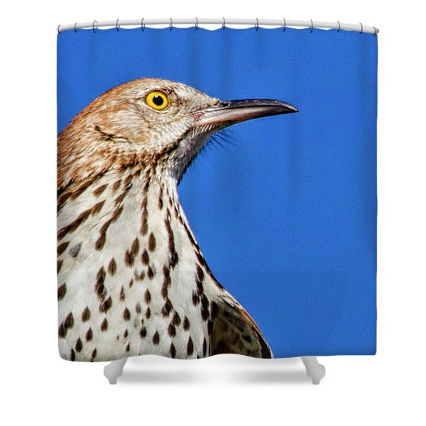 Portrait Of A Thrasher Shower Curtain