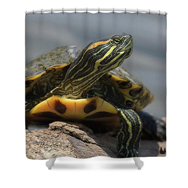 Portrait Of A Turtle Shower Curtain