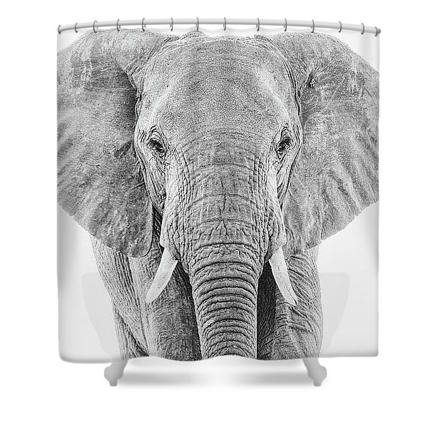 Portrait Of An African Elephant Bull In Monochrome Shower Curtain