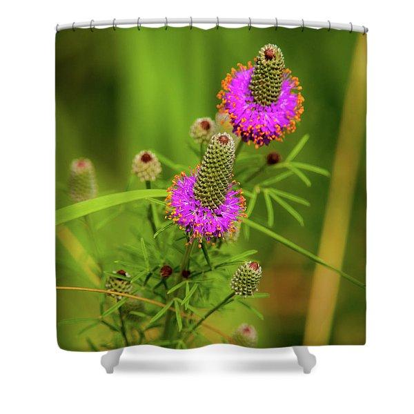 Prairie Clover Shower Curtain