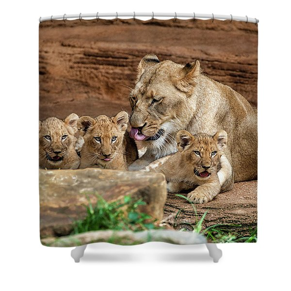 Pride Of The Pride 6114 Shower Curtain