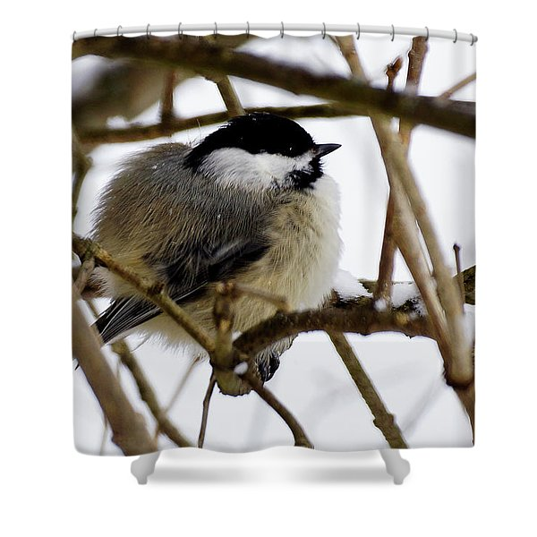Puffed Up Shower Curtain