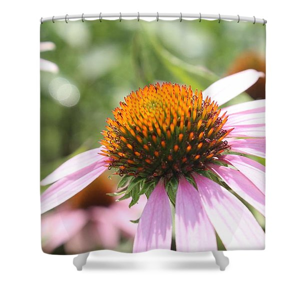 Purple Coneflower Bloom And Petals Shower Curtain