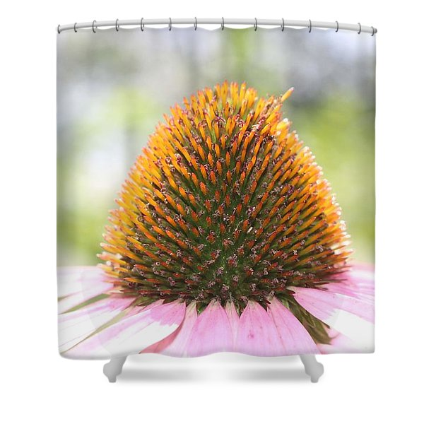 Purple Coneflower Seeds Shower Curtain