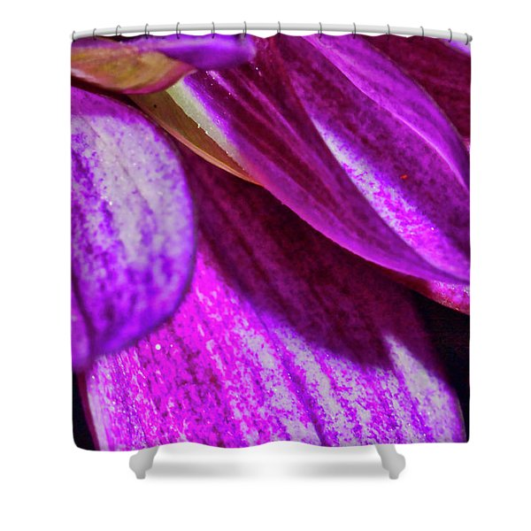 Shower Curtain featuring the photograph Purple Petals by Meta Gatschenberger