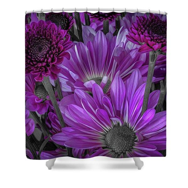 Purple Power Chrysanthem Selective Colorum  Shower Curtain