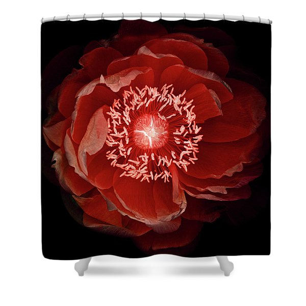Queen Of The Night Number Three Shower Curtain