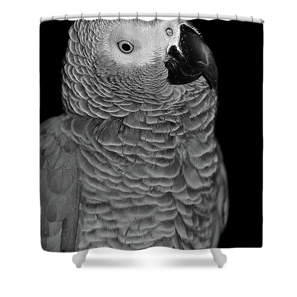 Quizzical African Grey Shower Curtain