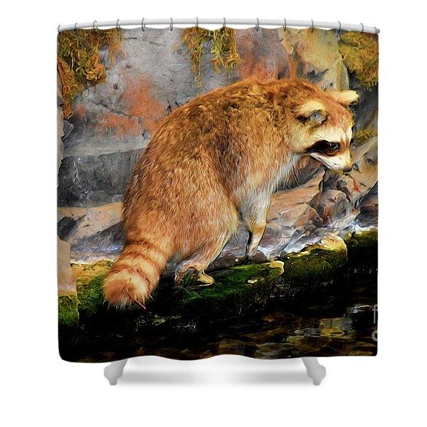 Raccoon 609 Shower Curtain