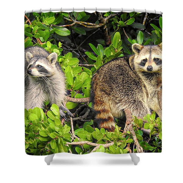 Raccoons In The Mangroves Shower Curtain