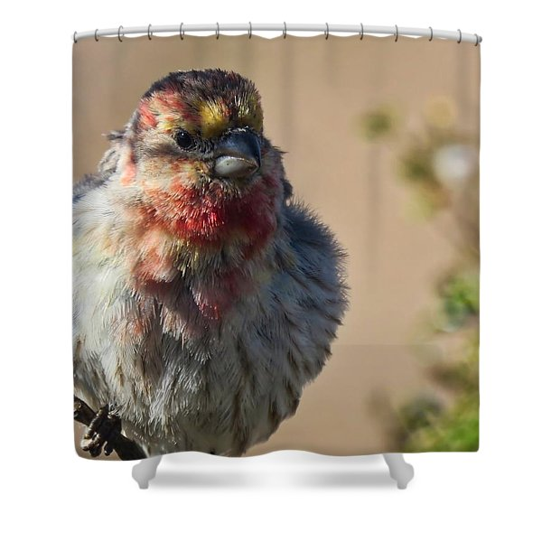 Rare Multicolored Male House Finch Shower Curtain