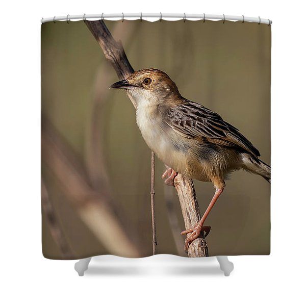 Rattling Cisticola Shower Curtain