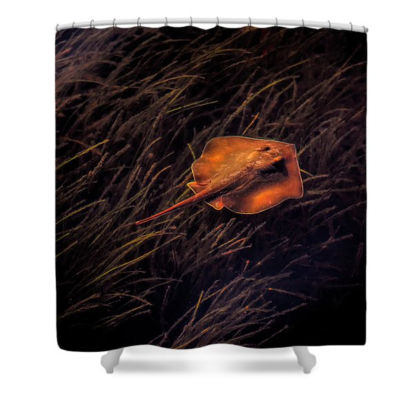 Ray In The Grass Flats Shower Curtain
