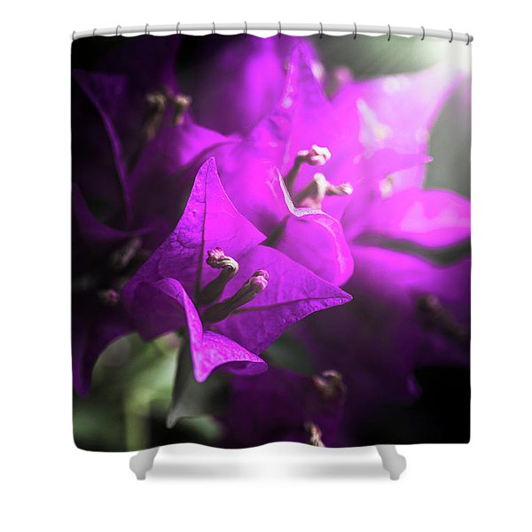 Rays Of Bougainvillea Shower Curtain