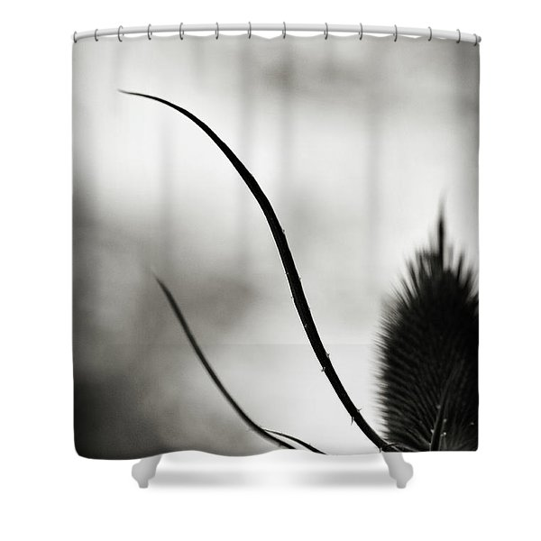 Shower Curtain featuring the photograph Reach Up by Michelle Wermuth