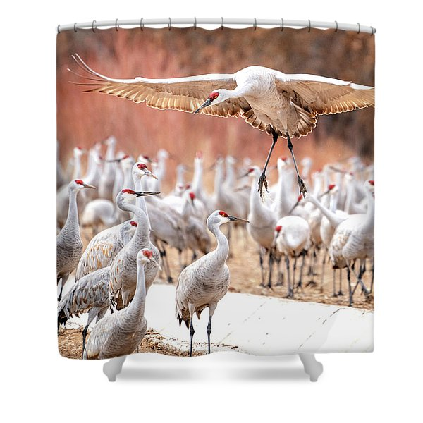 Ready Or Not, Here I Come -- Sandhill Cranes Shower Curtain