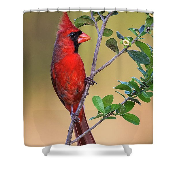 Red All Over Shower Curtain