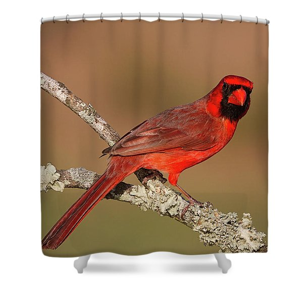 Red And Radiant Shower Curtain