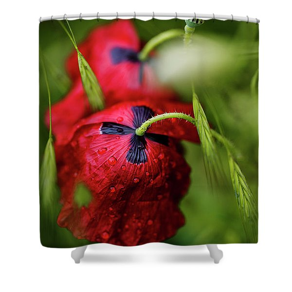 Red Corn Poppy Flowers With Dew Drops Shower Curtain