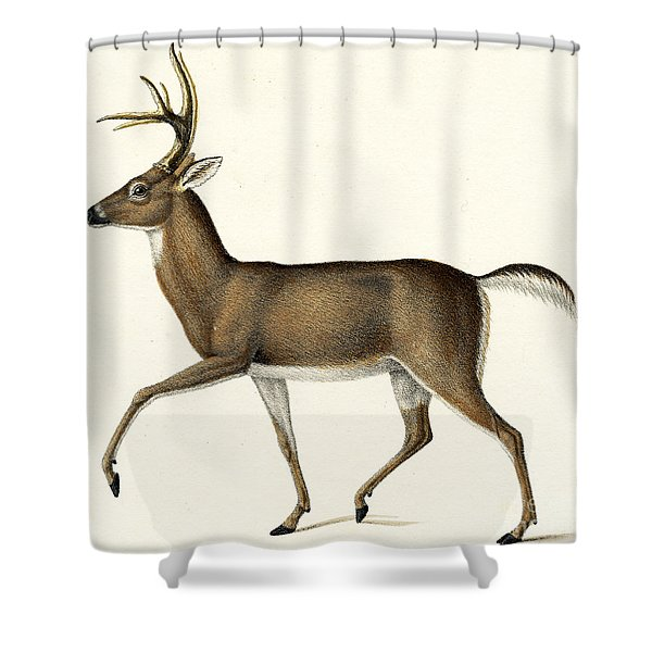 Red Deer, 1824 Colour Litho Shower Curtain