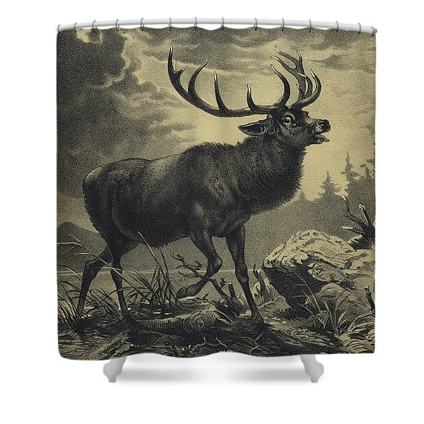 Red Deer Beside A Lake Shower Curtain
