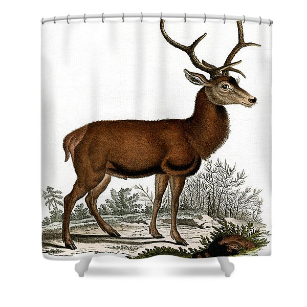 Red Deer Circa 19th Century Colored Engraving Shower Curtain