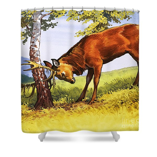 Red Deer Cleaning Antlers Shower Curtain