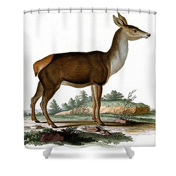 Red Deer Colored Engraving Shower Curtain