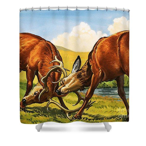 Red Deer Rutting Shower Curtain