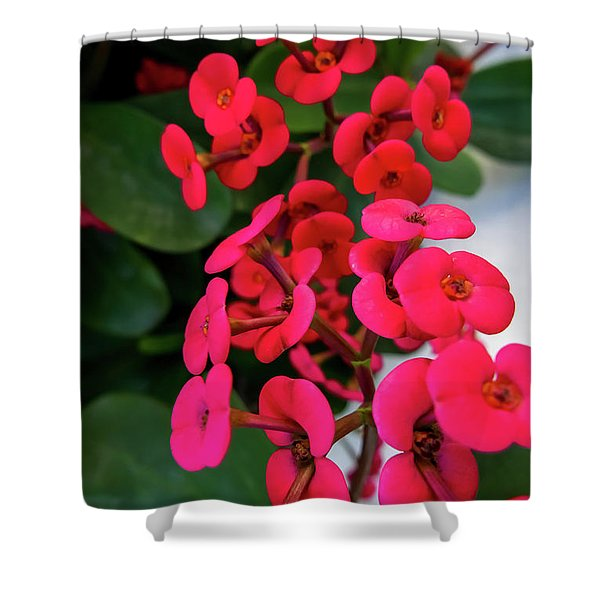 Red Flowers In Bloom Shower Curtain