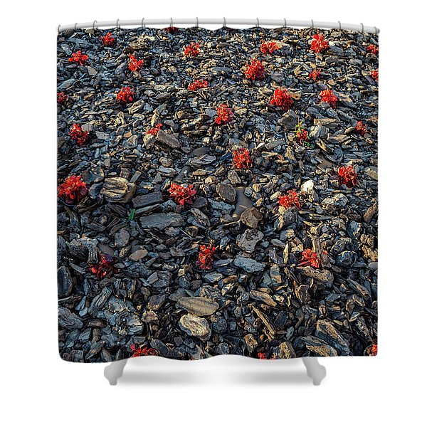 Red Flowers Over Stones Shower Curtain