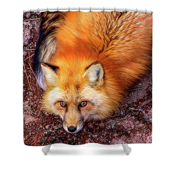 Shower Curtain featuring the photograph Red Fox In Canyon, Arizona by Dawn Richards